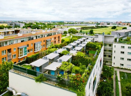 Radischen Balkon Garten Gemüsesorten geeignet